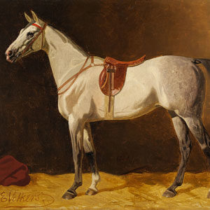 Emil Volkers . Gesattelter Schimmel . Öl /Leinwand . 56 x 81 cm